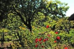 mendocino-resort-gardens-12