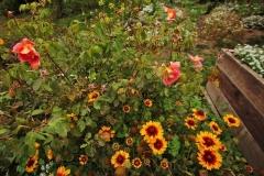 mendocino-resort-gardens-2