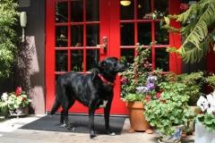 mendocino-hotel-resort-pet-friendly-8