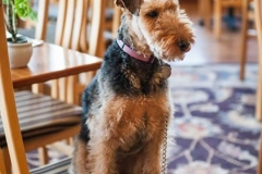 mendocino-hotel-resort-pet-friendly-9