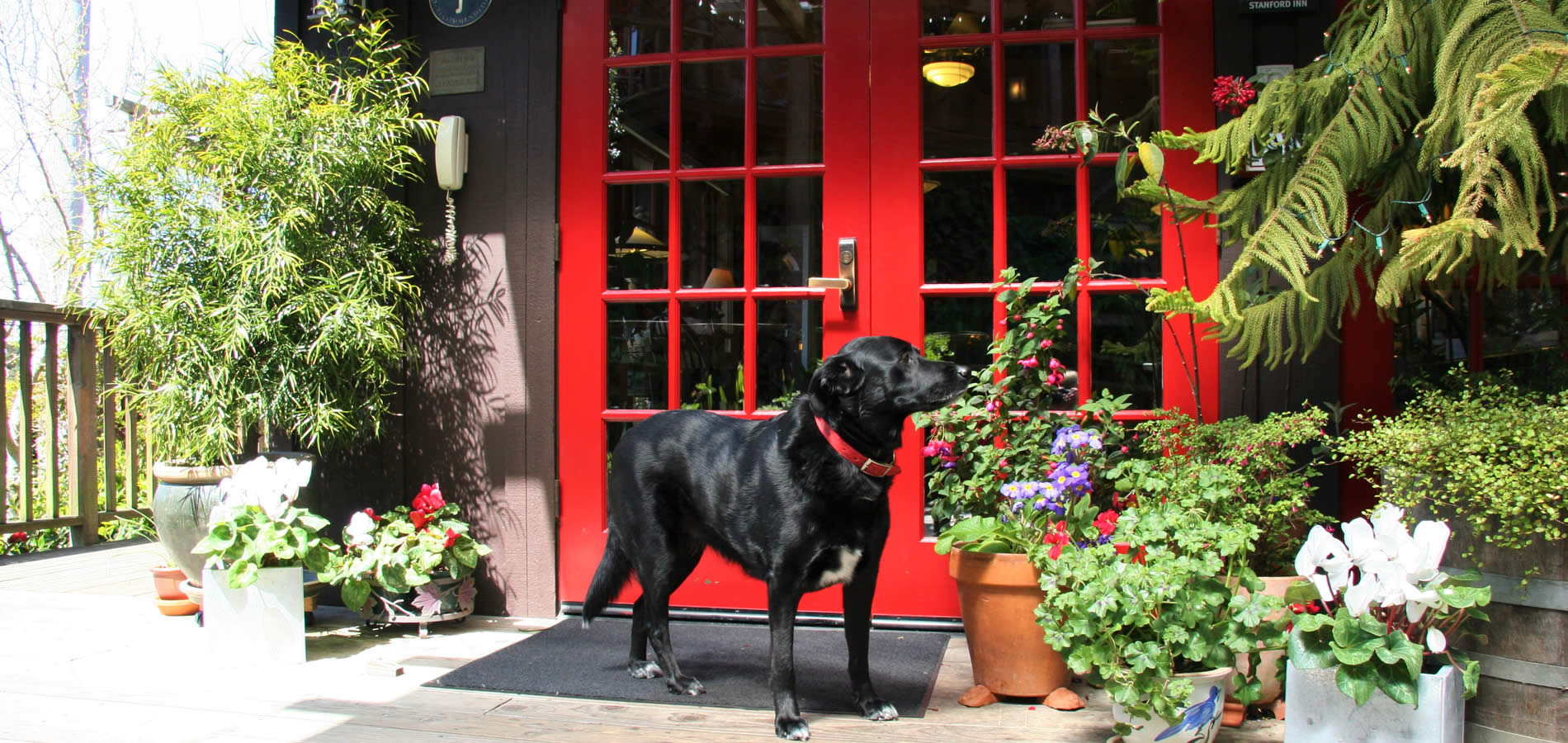 pet friendly mendocino hotel with dog welcomed