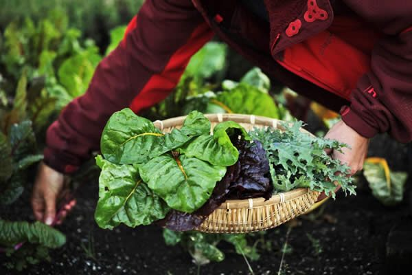 mendocino vacation packages: gardening