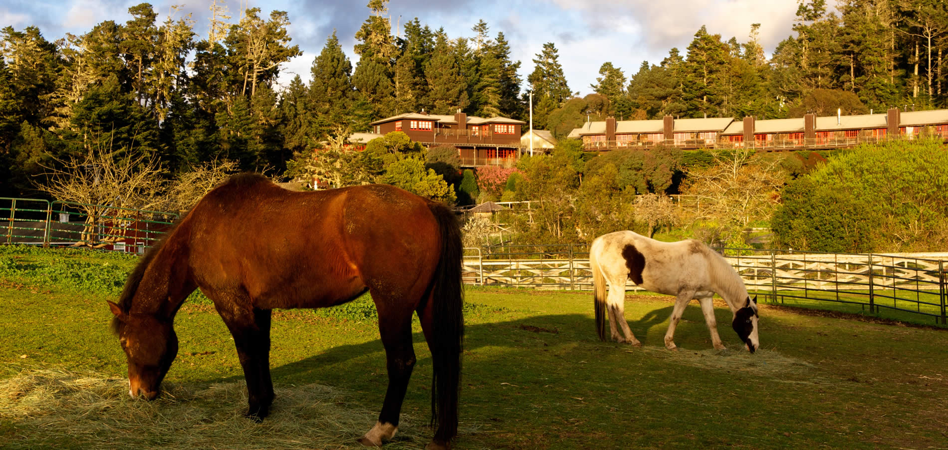 horses in foreground of the stanford inn mendocino hotel & resort